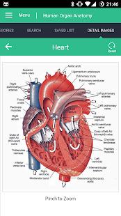 Captura de pantalla de la guía de referencia de anatomía de órganos humanos